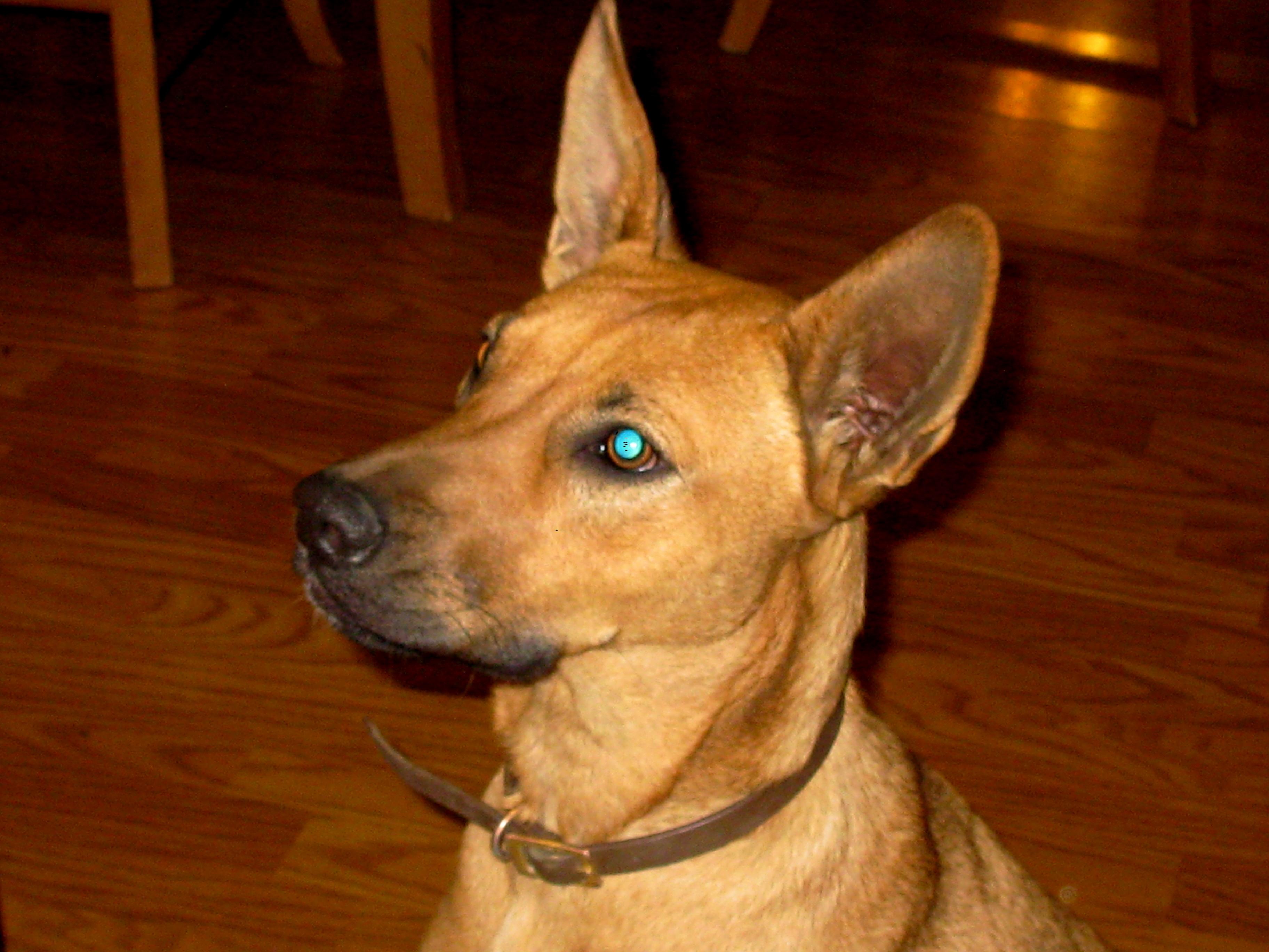 Lulu the wonder dog