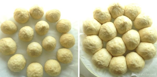 No Knead Rolls are placed on a dish to prove.