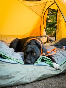 Diesel the mountain dog relaxing in our big agnes tent