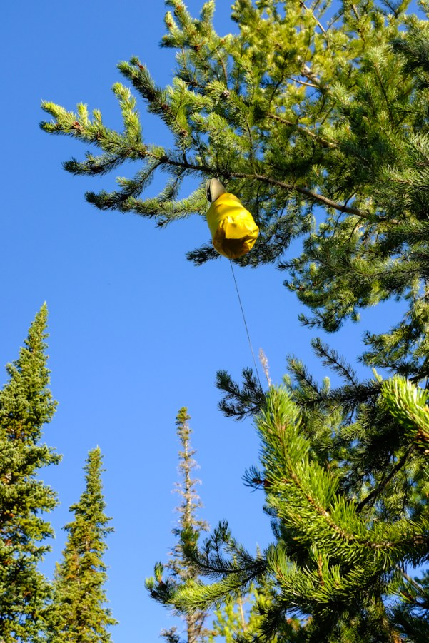 Discouraging bears by hanging our food high in the trees, far from camp.