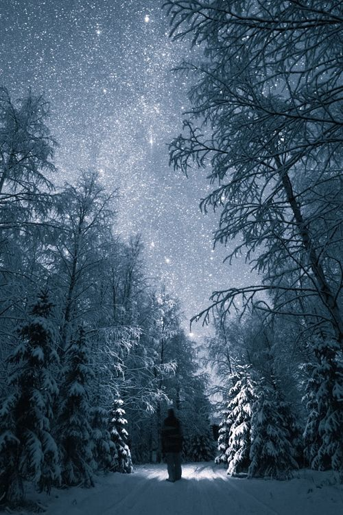 Photo Credit: Tiina Törmänen, A Walk through the Snow, Trees, and Stars