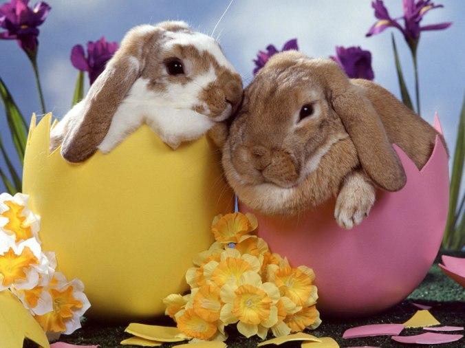 O site Crianças na Cozinha deseja a todos uma Feliz Páscoa!!!! Comam seus chocolatinhos, mas com moderação!!!