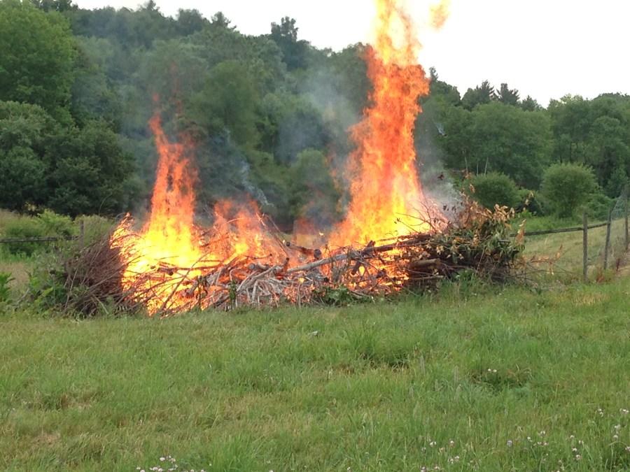 Arboretum Pile Burn 07_08_2016
