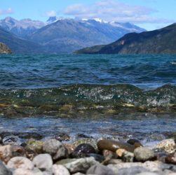 Patagonia chubutense