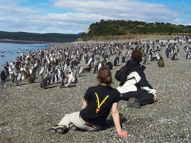 Personas observando a la colonia de pinguinos en la isla Martillo.