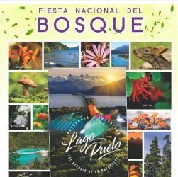 Afiche Fiesta Nacional Del Bosque 2020