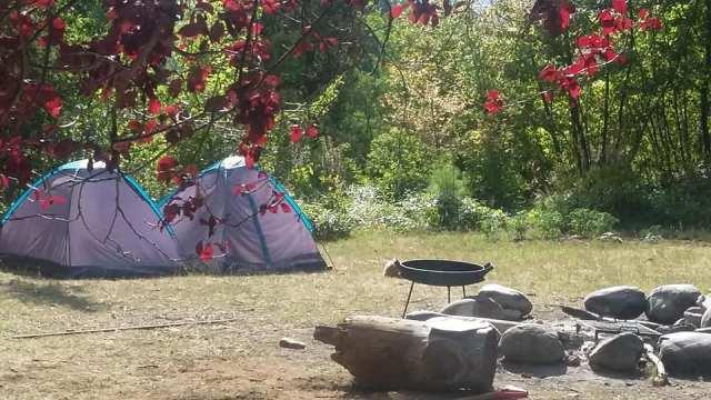 Dos carpes en el predio del camping Río Azul.