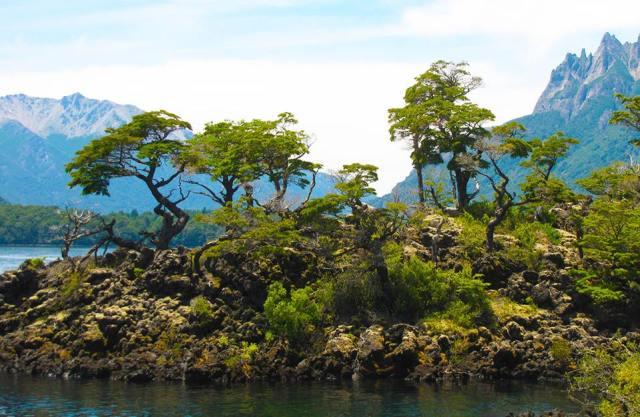 Bosque Enano en el Parque Nacional Lanin.