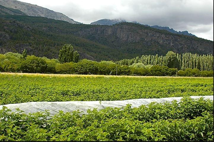 Cultivos del Camino de los Nogales