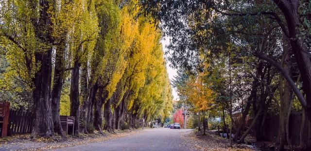 Colonia Suiza en Bariloche. Árboles en otoño.