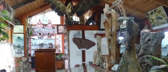 Museo geológico Rosendo Pascual.