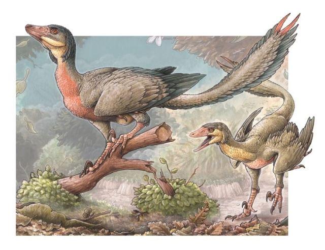 Ilustracion del Overoraptor, uno de los descubrimientos en la Patagonia.