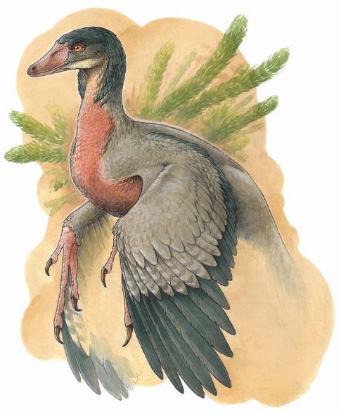 Overoraptor, el nuevo descubrimiento en la Patagonia.