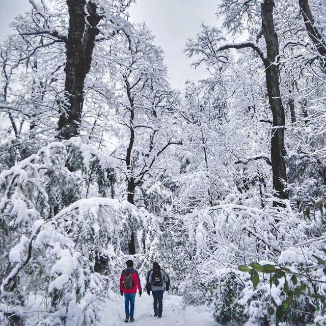 Personas caminando por el bosque con nieve en San martín de los Andes.
