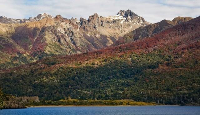 Paisaje de árboles en la Patagonia.