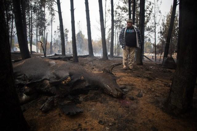 Devastadora imagen después del incendio en la Comarca Andina