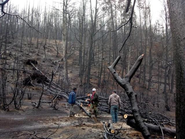 Operarios trabajando luego de los incendios.