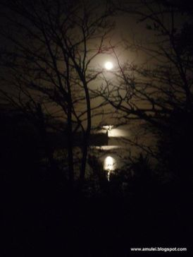 Nothofagus antarctica, a winter night