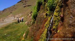 botanical-tour-patagonia
