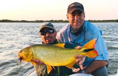 golden dorado by Patagonia Fly Fisherman, William Jack Stephens