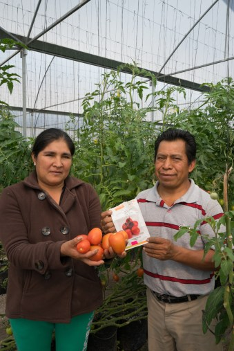 Gabriela Gonzalez Lopez and her husband Esteban, in their greenhouse in Ixmiquilpan in the state of Hidalgo, north of Mexico City. They're showing some ripening tomatoes and the seed packet with the type they grow: Number 7705, a hybrid (from Nunhems, Bayer Crop Science). GMO. Oh well.