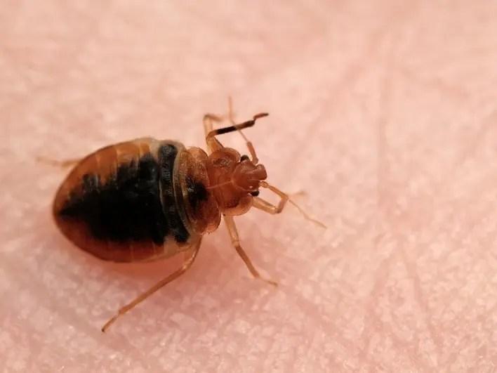 Got Bed Bugs? 6 Ohio Cities Among 2021's Worst Hit