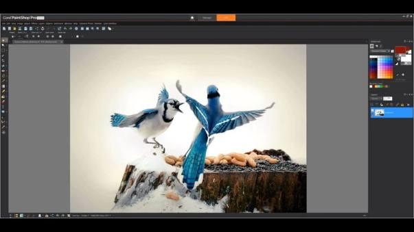 Corel PaintShop Pro 2020 Ultimate Cracked