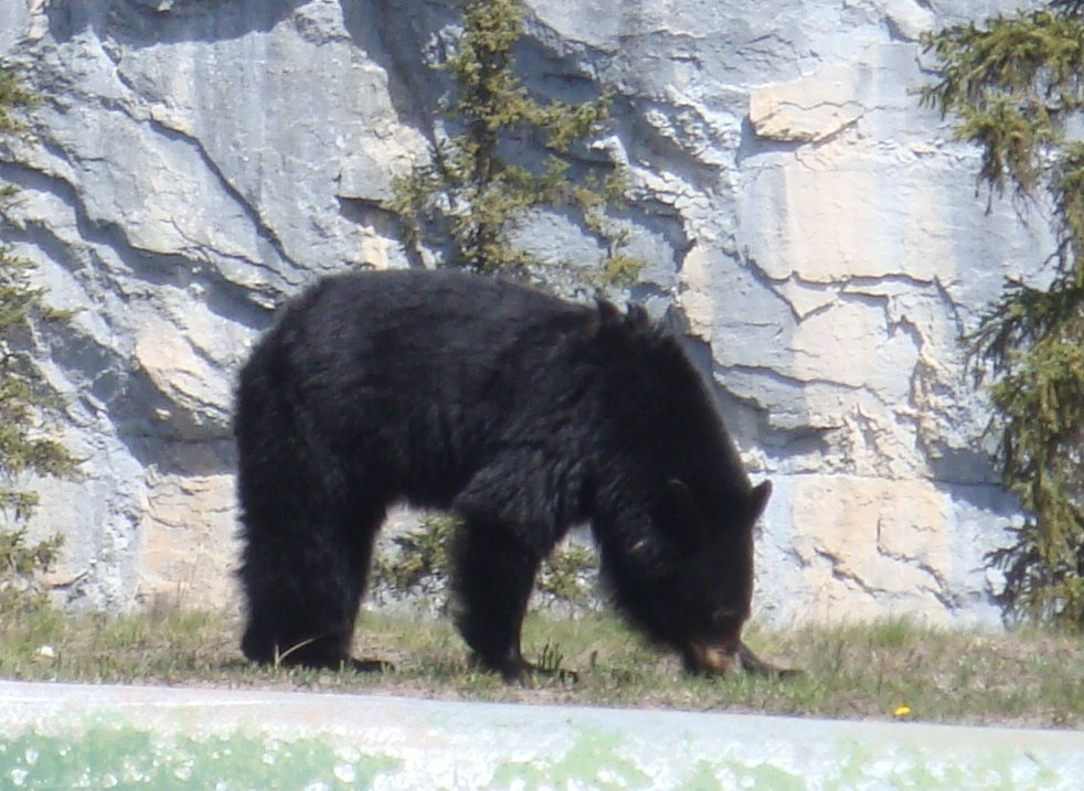 So, you want to buy bear spray? (1/6)