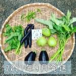 202109月旬彩野菜バスケット
