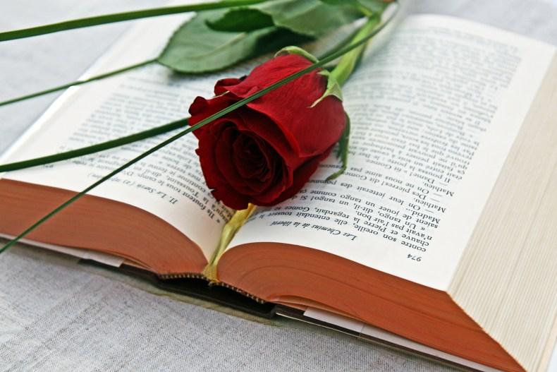 Livre et rose pour Sant Jordi