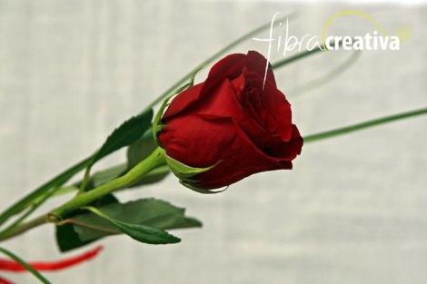 Rose-rouge-web