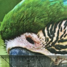 impresión sobre percal de algodón detall