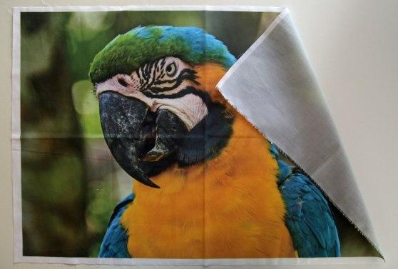 foto impresa sobre tela papagayo
