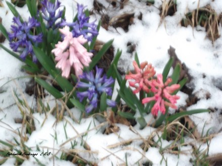 'springing' out of winter