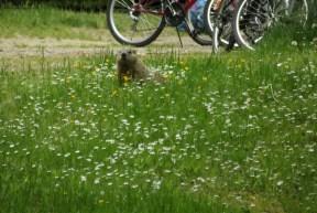 Groundhog Allegany
