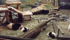 Er Shun with Jia Panpan and Jia YueYue