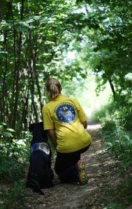 Rettungshund bei der Suche