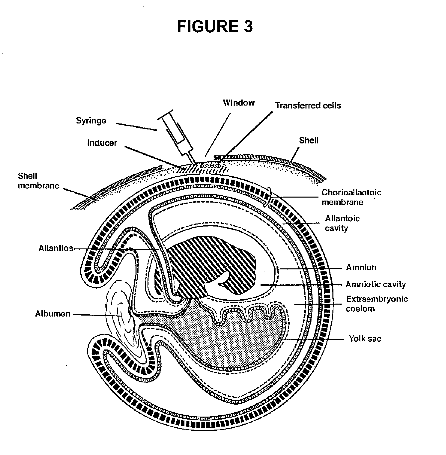 Diagram Of Human Egg Catalogue Of Schemas