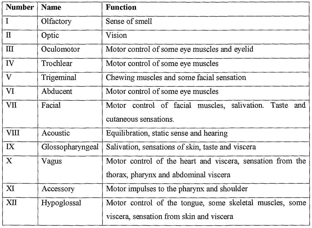 Cranial Nerve Sensory Or Motor | Newmotorspot.co