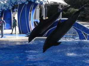 One of the many shows at SeaWorld