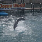 Ocean World Dolphin Show