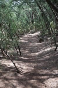 Walking/Biking Trail in Oleta River Park, Miami