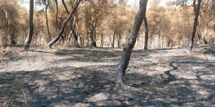 Una zona de la Vallesa afectada por el incendio