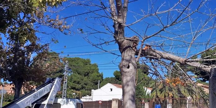 Un árbol roto a consecuencia de las rachas de viento