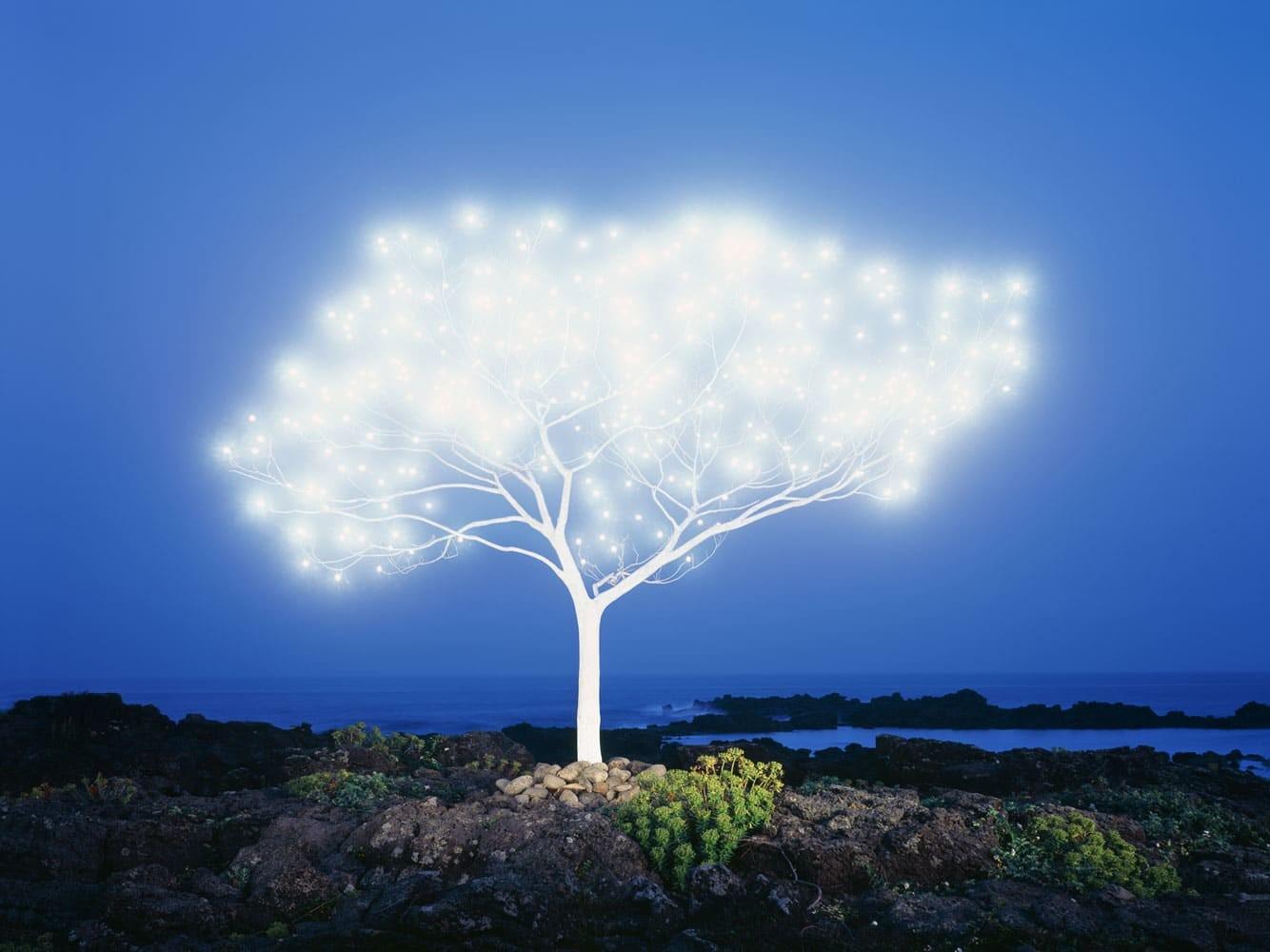 De quel arbre votre âme prend source ?