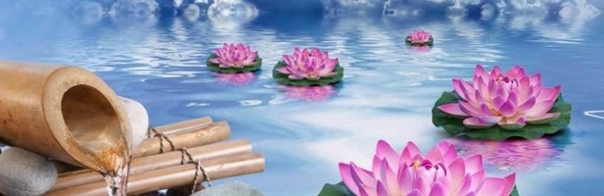 lotus zen