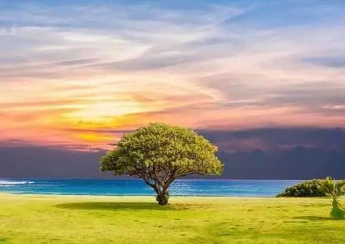 Comment les arbres nous aident à guérir avec leur incroyable énergie