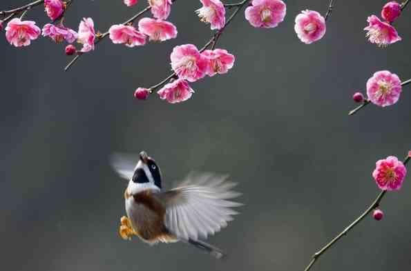 L'arrivée du printemps et le renouveau intérieur