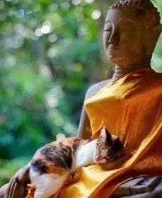 La légende bouddhiste à propos des chats