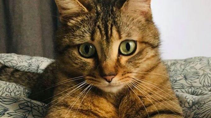 Animal Totem – Le Chat: La symbolique